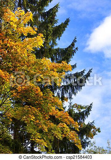 bright autumn tree in park  - csp21584403