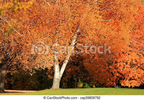 Bright autumn tree - csp39809792