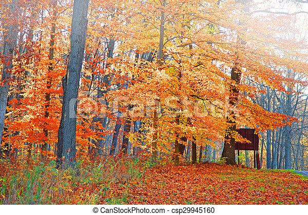Bright autumn trees - csp29945160