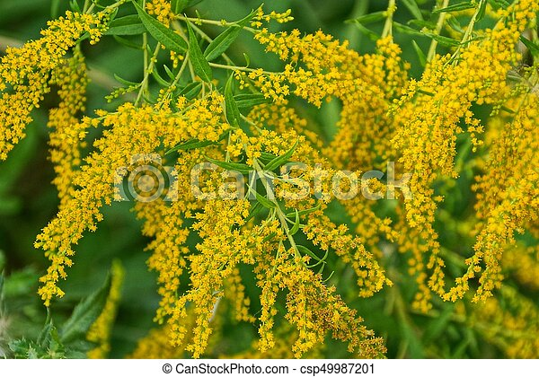 Bright Background Of Branches Of Yellow Wild Flowers In Nature