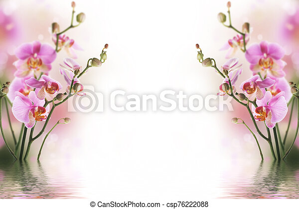 Bright background with purple orchids, which are reflected in the water - csp76222088