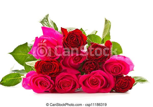 bright beautiful pink roses - csp11186319