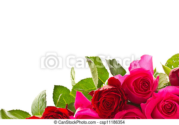 bright beautiful pink roses - csp11186354