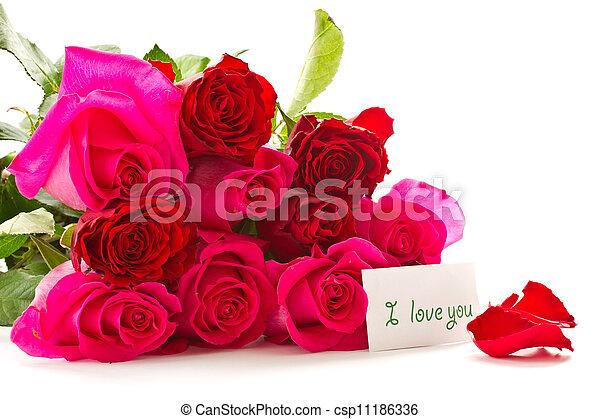 bright beautiful pink roses - csp11186336