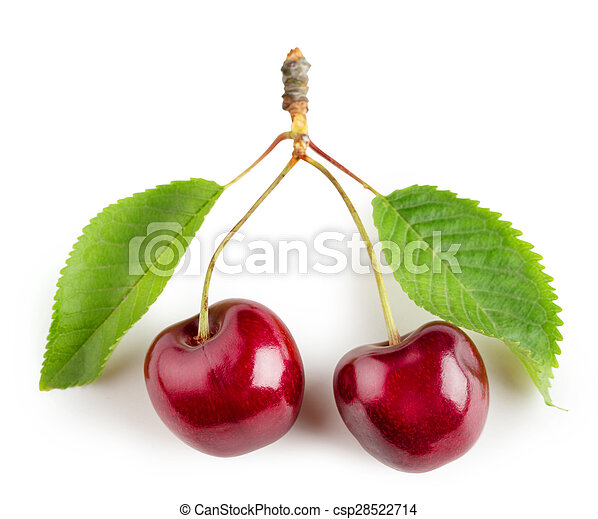 Bright cherry fruit with green leaves - csp28522714
