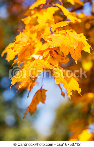 Bright colors of the autumn leaves, bokeh - csp16758712