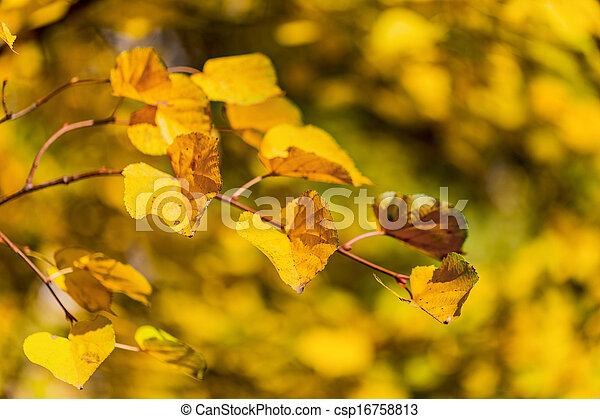 Bright colors of the autumn leaves - csp16758813