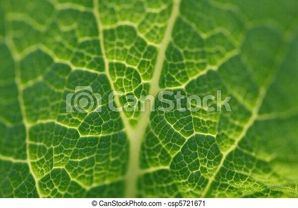 bright green leaf foxglove close-up in backlighting, macro - csp5721671
