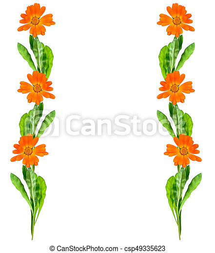 Bright marigold flowers isolated on white background mightylinksfo