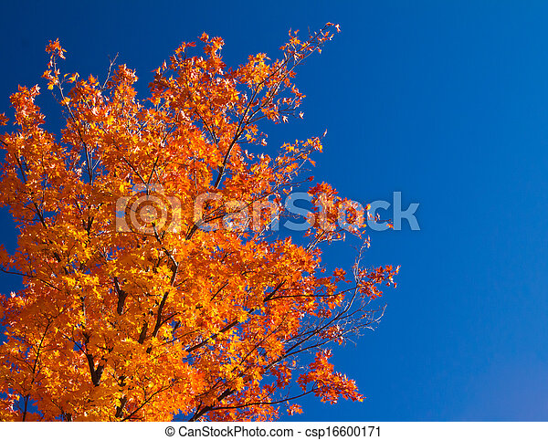 Bright Orange Fall Leaves on Blue Sky - csp16600171