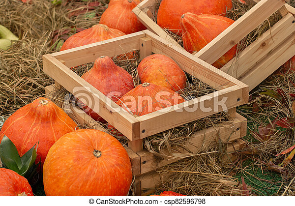 Bright orange pumpkins in wooden boxes. Farm harvest. Selling pumpkins and squash in the market - csp82596798