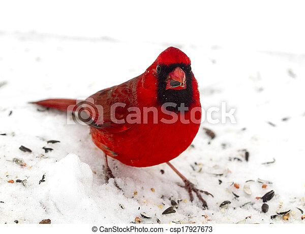 Bright Red and Beautiful Cardinal - csp17927673