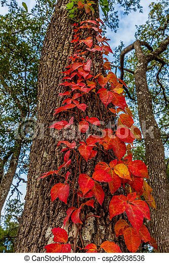 Bright Red Leaves - csp28638536