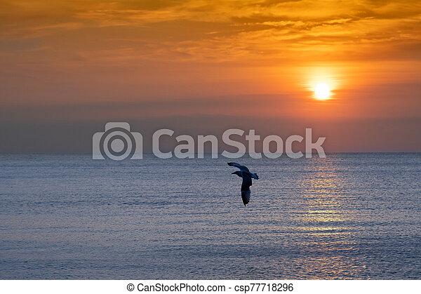 bright sunset - csp77718296