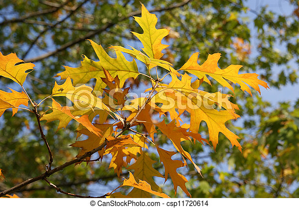 Brightly colored autumn leaves in the light of bright sunshine - csp11720614