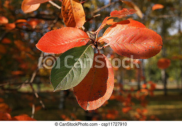 Brightly colored autumn leaves in the light of bright sunshine - csp11727910
