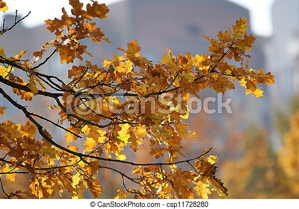 Brightly colored autumn leaves in the light of bright sunshine - csp11728280