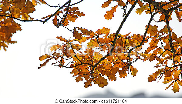Brightly colored autumn leaves in the light of bright sunshine - csp11721164