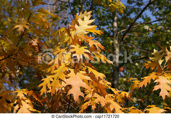 Brightly colored autumn leaves in the light of bright sunshine - csp11721720