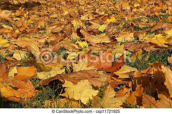 Brightly colored autumn leaves in the light of bright sunshine - csp11721925