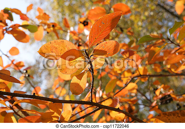 Brightly colored autumn leaves in the light of bright sunshine - csp11722046