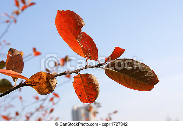 Brightly colored autumn leaves in the light of bright sunshine - csp11727342