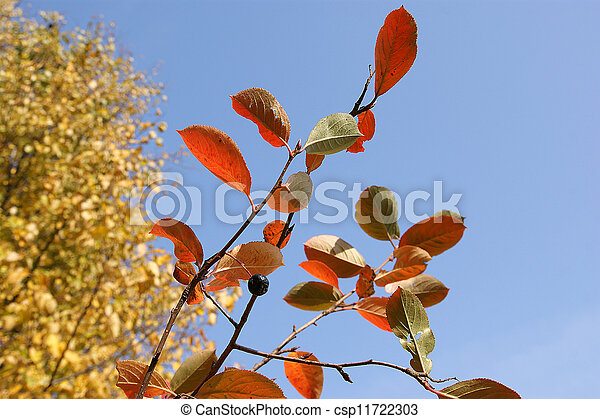 Brightly colored autumn leaves in the light of bright sunshine - csp11722303