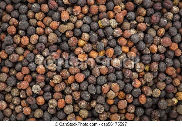 broccoli organic sprouting seeds - csp56175597