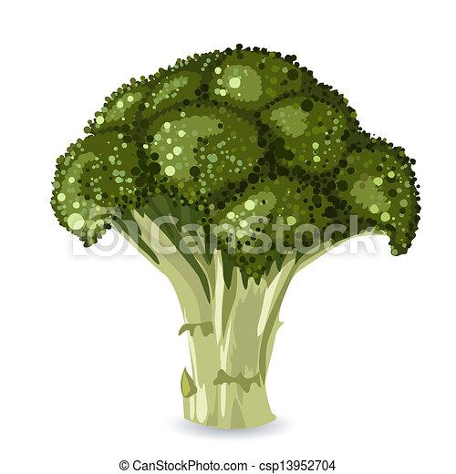broccoli https www canstockphoto com broccoli 13952704 html