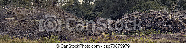 Broken sticks and logs in forest from deforestation . Forestry trees exploitation - csp70873979