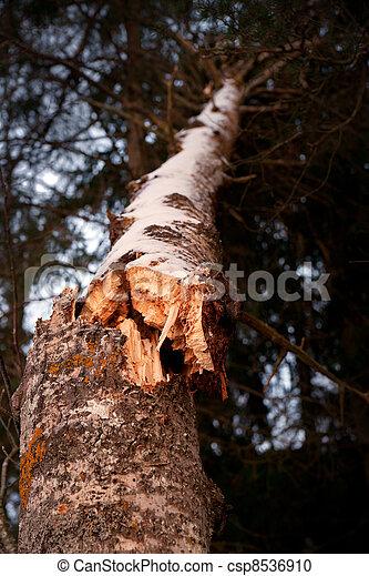 Broken tree - csp8536910