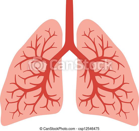 (bronchial, humain, poumons, system) - csp12546475