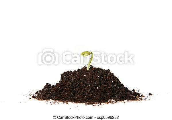 brotar, plantado, semente - csp0596252