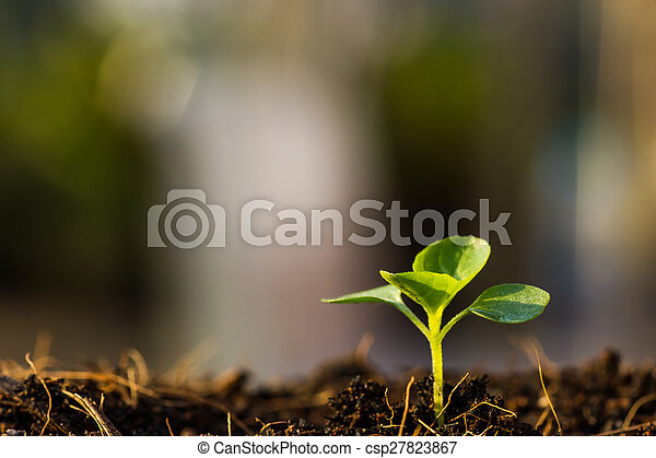 El brote verde está creciendo - csp27823867