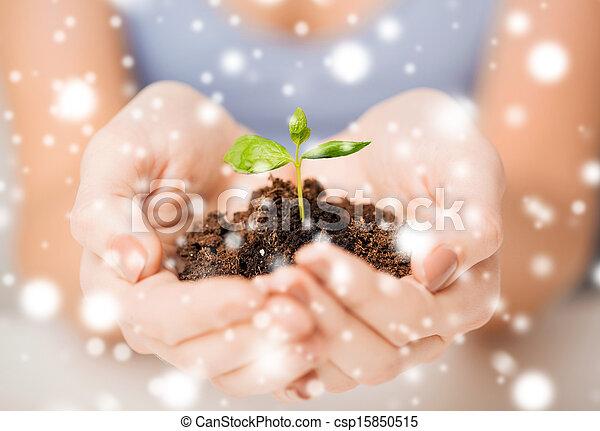 Manos con brotes verdes y tierra - csp15850515