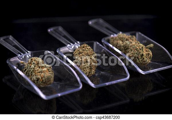 brotes, concepto, dispensario, aislado, encima, -, marijuana, tres, cannabis, blanco - csp43687200
