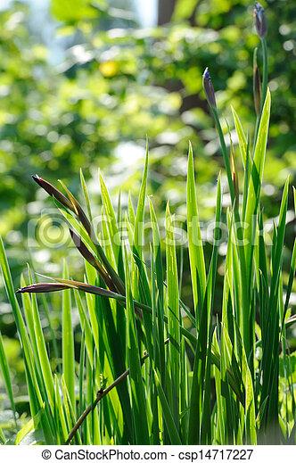 Brotes Iris Flor Hojas Cama Flores Brotes Iris Flor Hojas