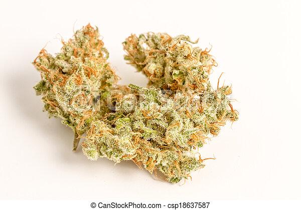 brotes, marijuana - csp18637587