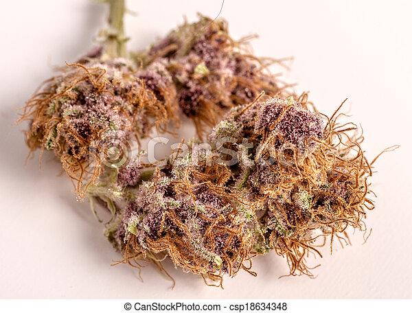 brotos, marijuana - csp18634348