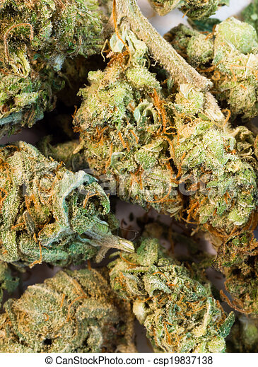brotos, planta, natural, cannibis, marijuana, quebrada, verde, flores - csp19837138