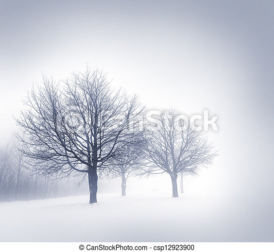 brouillard, arbres hiver - csp12923900