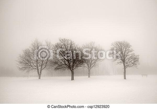 brouillard, arbres hiver - csp12923920