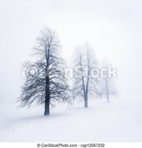 brouillard, arbres hiver - csp12567232