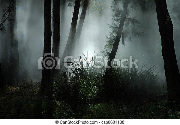 brouillard, forêt - csp0601108