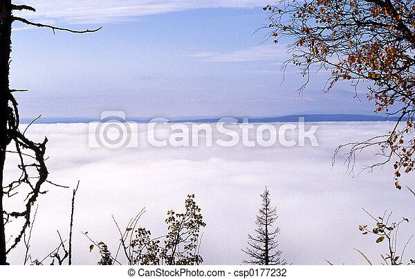 brouillard - csp0177232