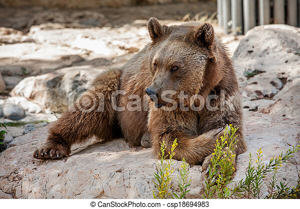 Brown bear on the rocks. - csp18694983