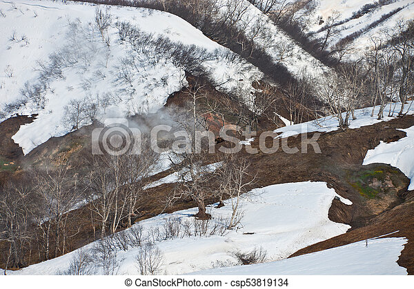 Brown bear on the slopes among the stone birches in the Valley of Geysers - csp53819134