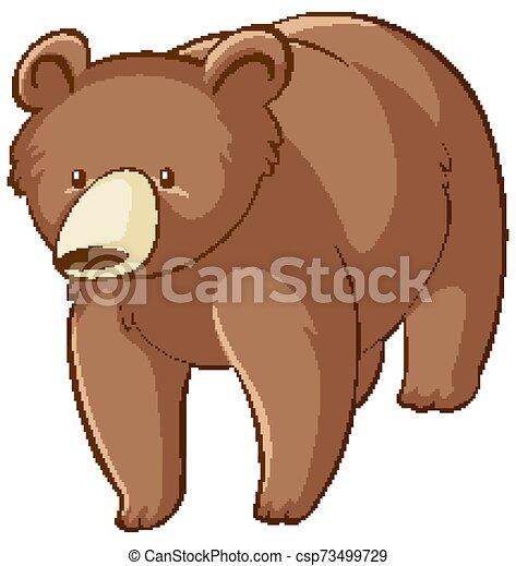Brown bear on white background - csp73499729
