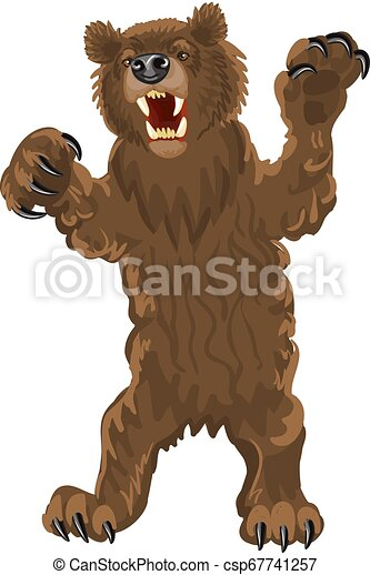 Brown bear stands snarling, aggressive - csp67741257