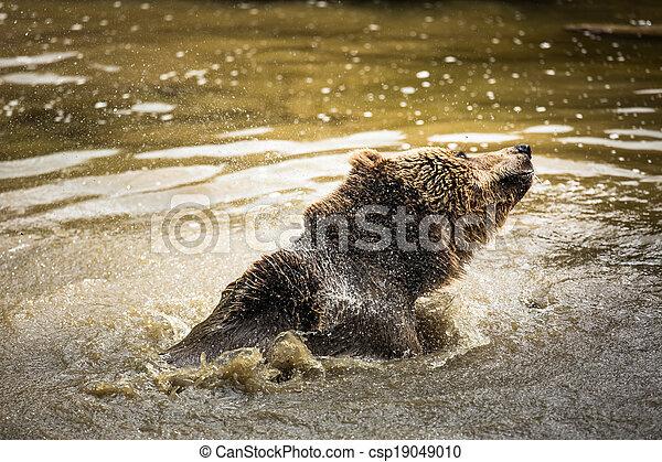Brown bear (Ursus arctos) - csp19049010